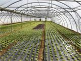 Commercial greenhouse tunnel extension, 9.7x2x3.95 m, Transparent - 9